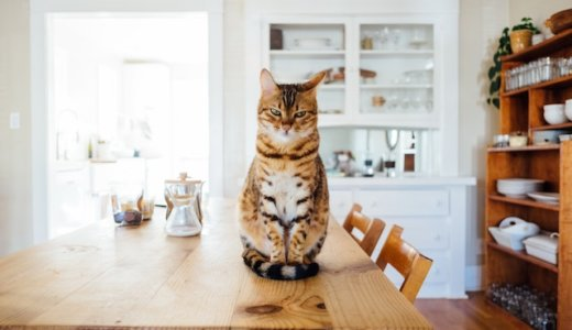 一人暮らしの狭いキッチンをおしゃれにする。収納アイディア紹介!
