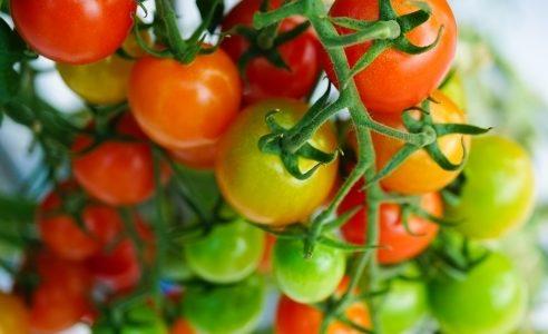 ミニトマトの不思議と特徴を生かす調理方法をご紹介!